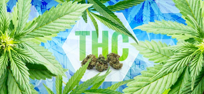 ¿Cuándo Se Descubrió El THC?