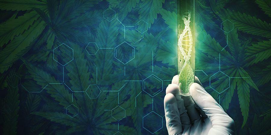 Motivos Para Regenerar Tus Plantas De Cannabis
