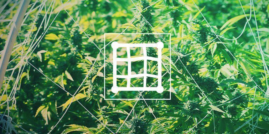 Estructuras De Soporte Para El Cannabis