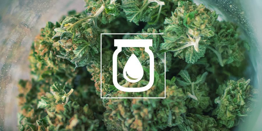 El Curado Al Agua del Cannabis: Qué Es y Cómo Se Hace