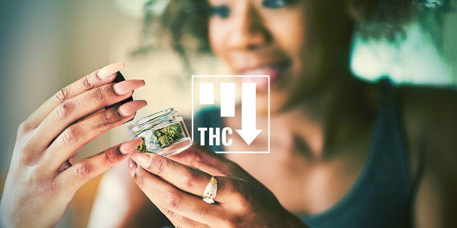 Efectos Del Cannabis Ruderalis