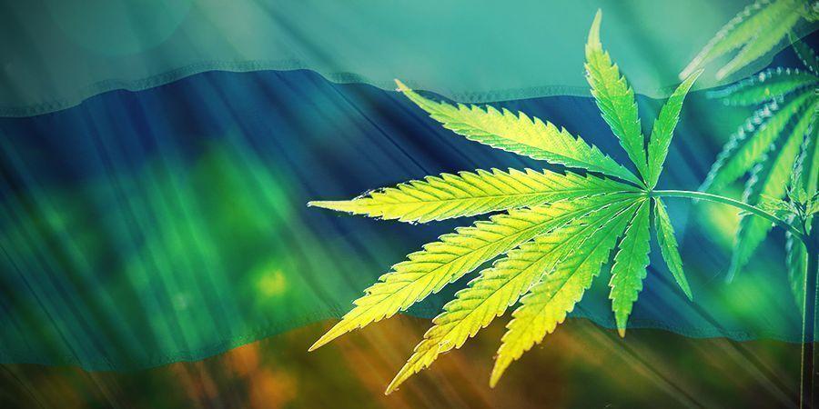 Orígenes Del Cannabis Ruderalis