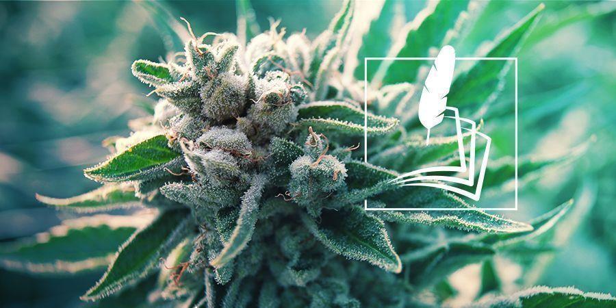Historia Del Cannabis