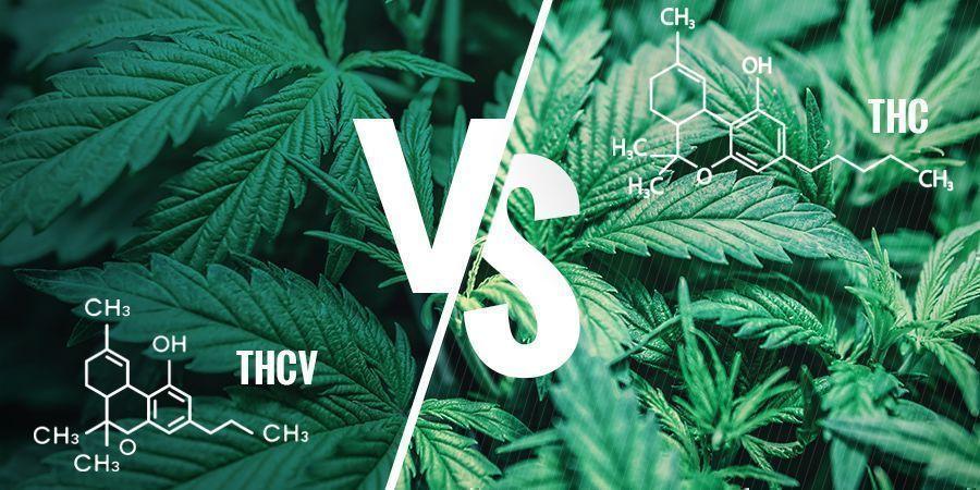 THCV vs THC: ¿en qué se diferencian?