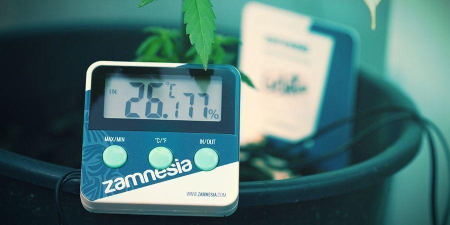 Marihuana: Condiciones Óptimas Para La Fotosíntesis
