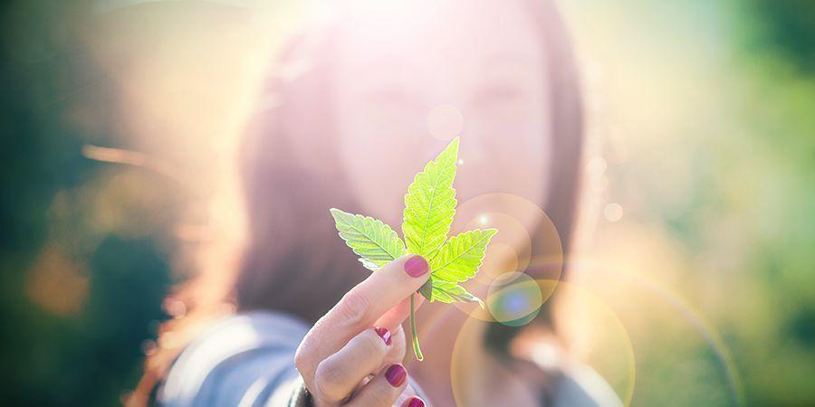 Aficionados A La Marihuana