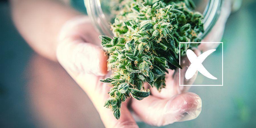 Semillas De Marihuana Regulares: Desventajas
