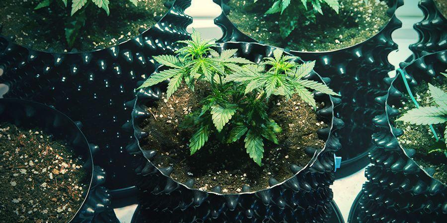 Macetas Air-Pots Cannabis