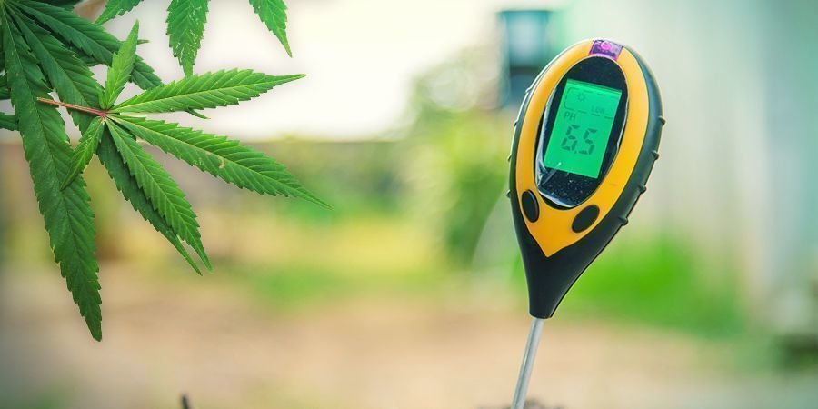 Cultivar Marihuana En Lana De Roca: FASE VEGETATIVA