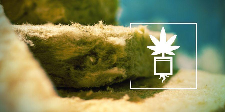 Cultivar Marihuana En Lana De Roca