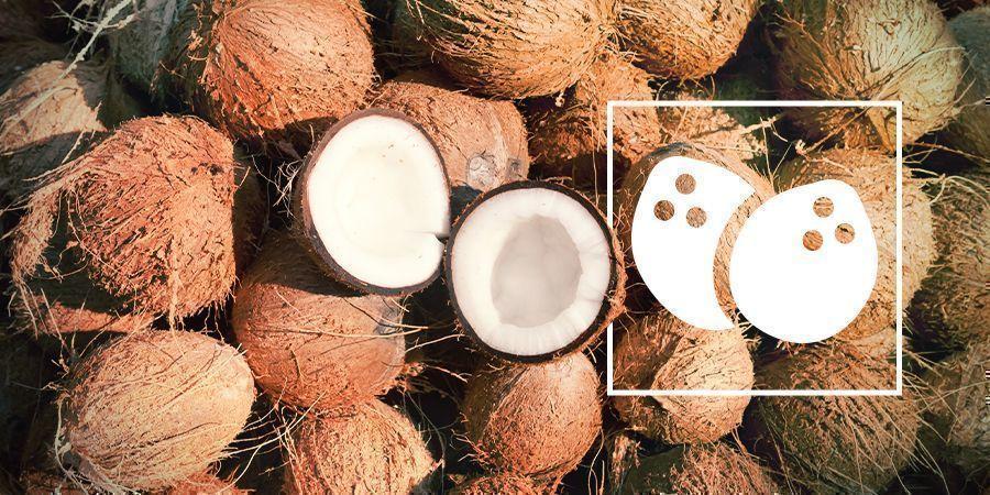 El Cultivo De Cannabis En Coco