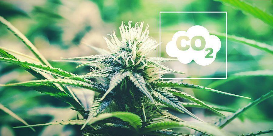 CO₂ Y Cannabis