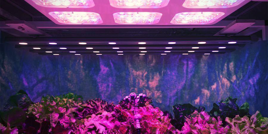 Potencia De Luz Por Planta