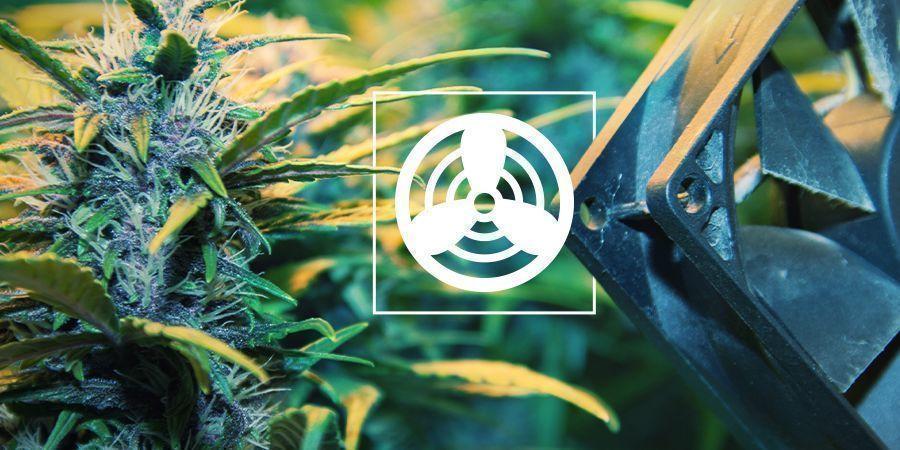 Ventilación Del Espacio De Cultivo De Cannabis