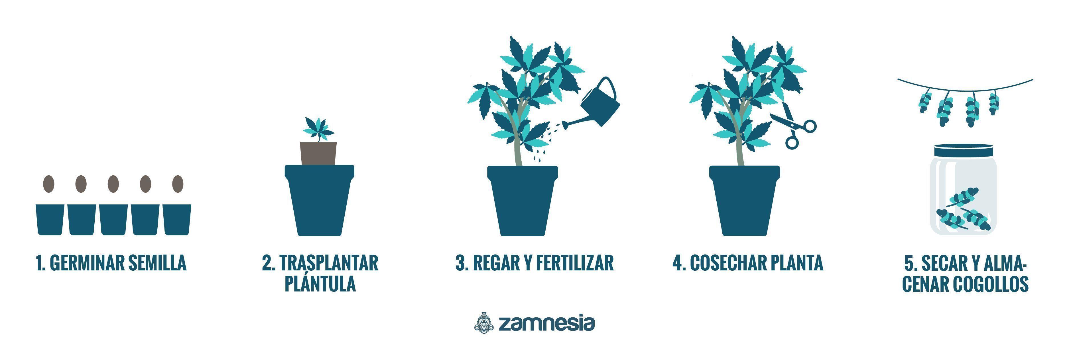 Cómo Cultivar Marihuana En Exterior