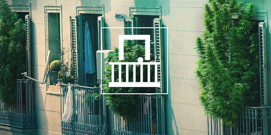 Por Qué Debes Cultivar Cannabis En El Balcón O Terraza