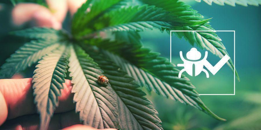 Bichos E Insectos Beneficiosos