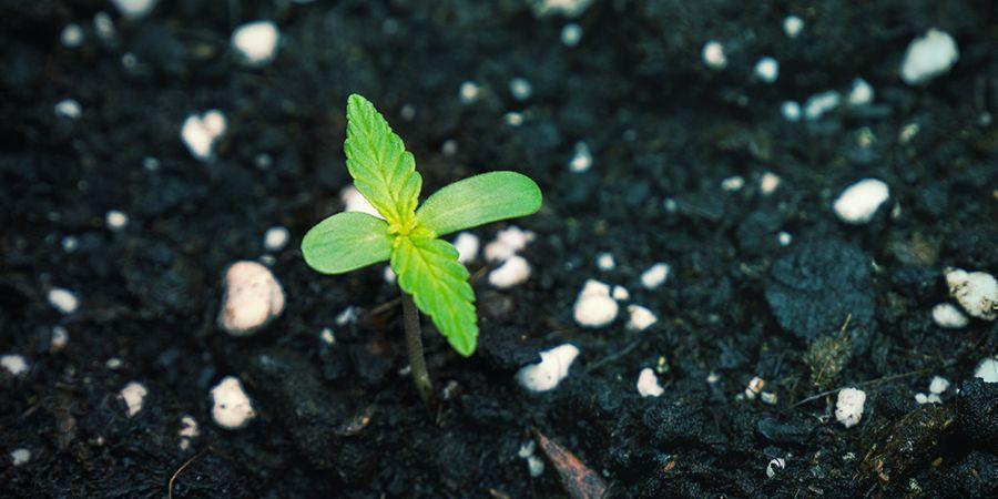 El Magnesio En Los Fertilizantes Químicos Vs. Fertilizantes Ecológicos