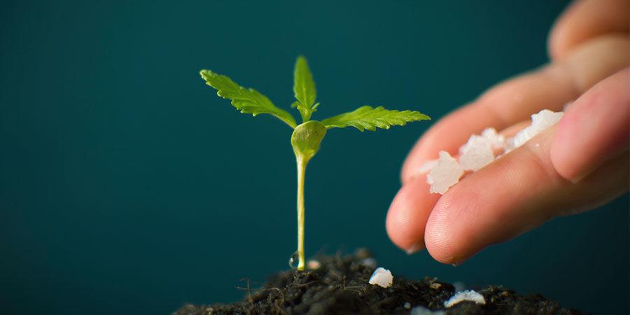 NPK: ¡No Te Pases Con El Fertilizante!