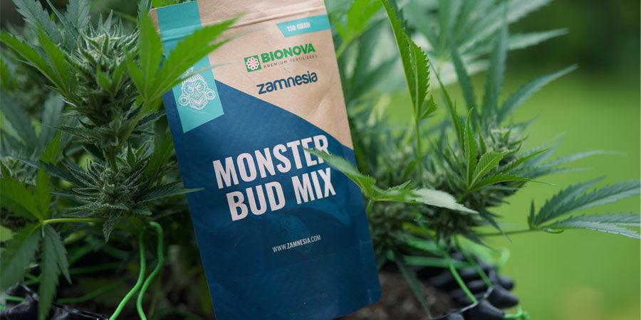 ¿Qué Nutrientes Necesitan Las Plantas De Marihuana Autoflorecientes?