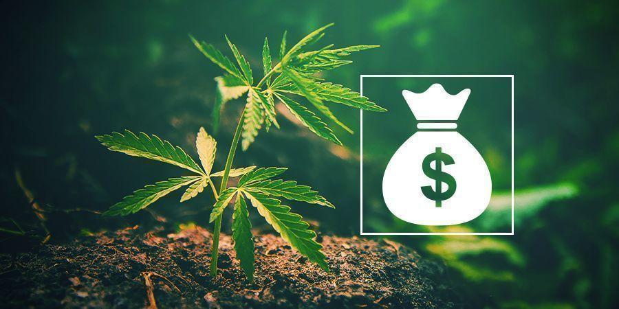 ¿Por Qué Cultivar Tu Propia Marihuana?