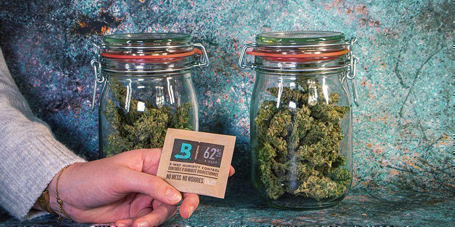 Almacenamiento De Marihuana Tras La Cosecha
