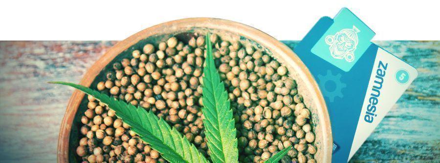 Información Sobre Semillas De Marihuana