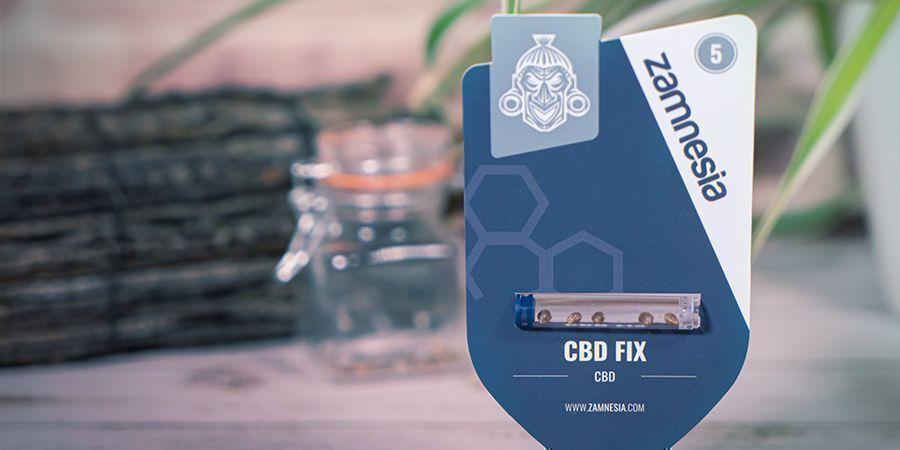 ¿Qué Son Las Semillas De Cannabis Ricas En CBD?