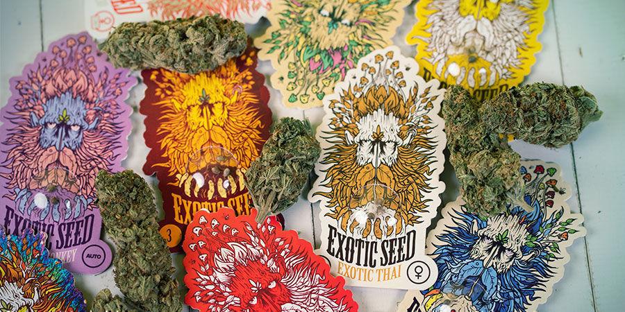 envasa semillas Exotic Seed