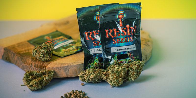 Resin Seeds: Semillas De Marihuana Feminizada