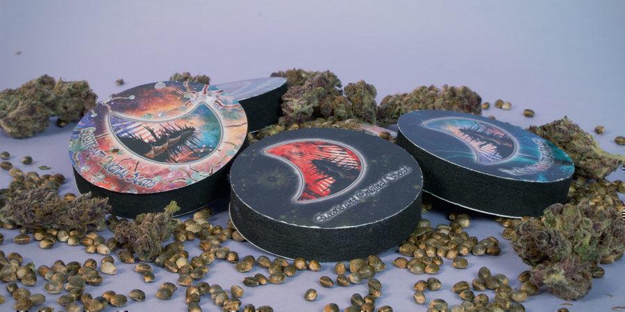 Empaquetan Semillas Marihuana GeneSeeds