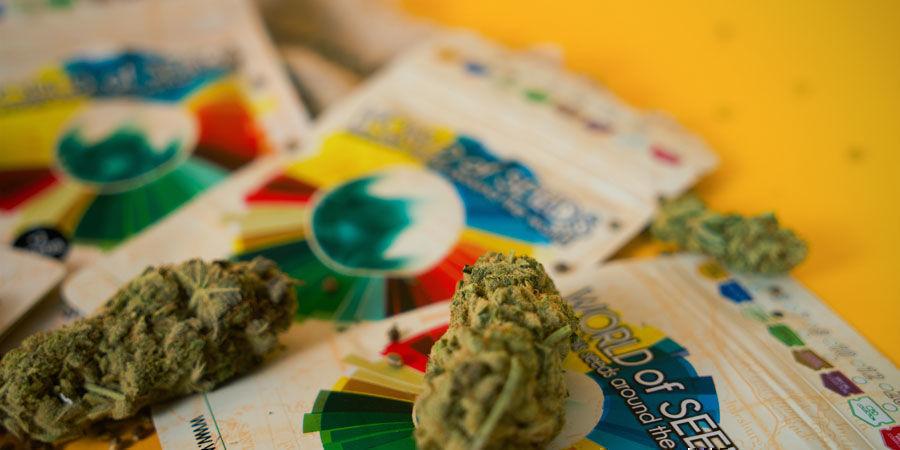 ¿Cuáles Son Las Mejores Cepas De Marihuana De World Of Seeds?