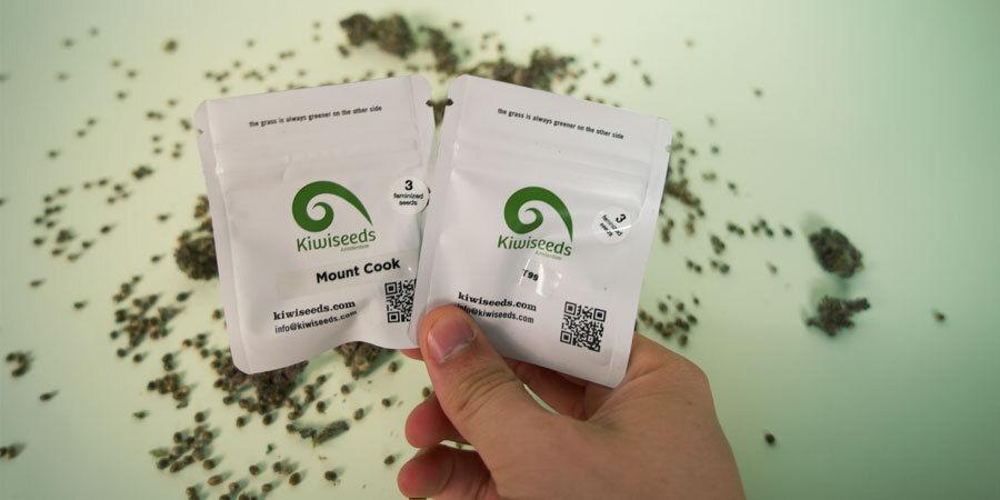 ¿Cómo Se Empaquetan Las Semillas De Marihuana De Kiwi Seeds?