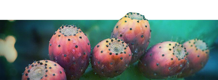 La Guía Definitiva Sobre los Cactus de Mescalina