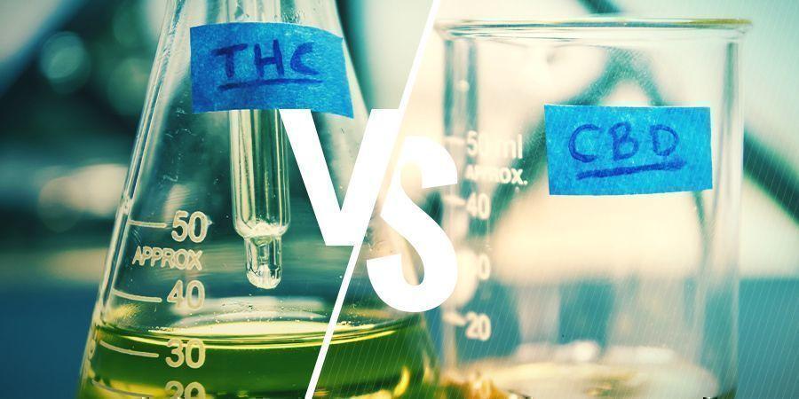 ¿EN QUÉ SE DIFERENCIAN EL THC Y EL CBD?