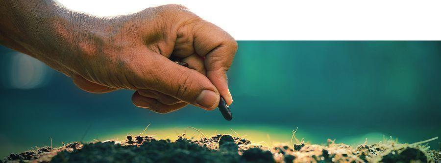 Smart Seeds - Cultiva psicodélicos y afrodisíacos naturales en casa