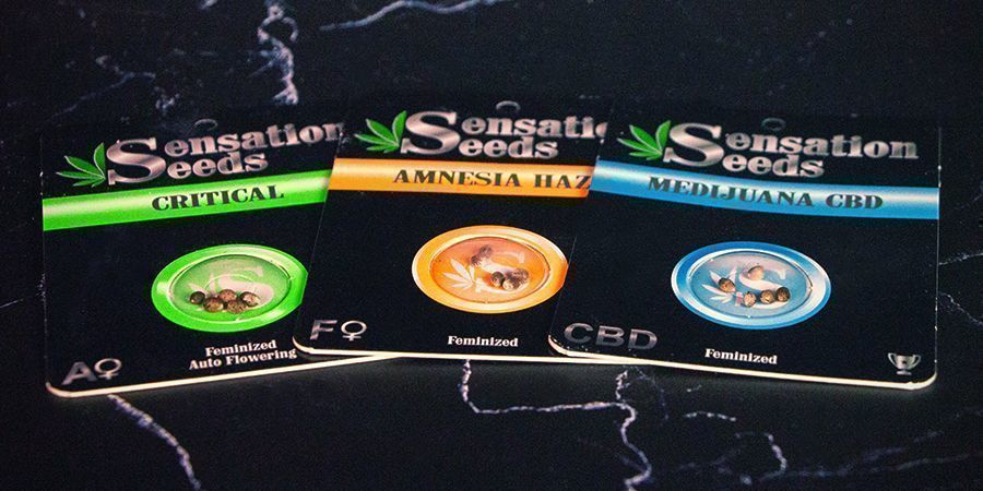 Envasas de Sensation Seeds