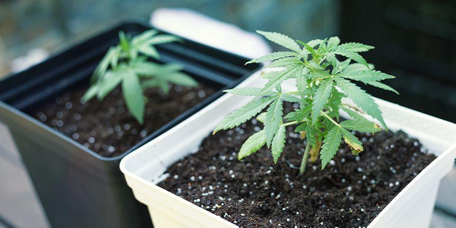 Fertilizantes Para Las Diferentes Fases Del Cultivo