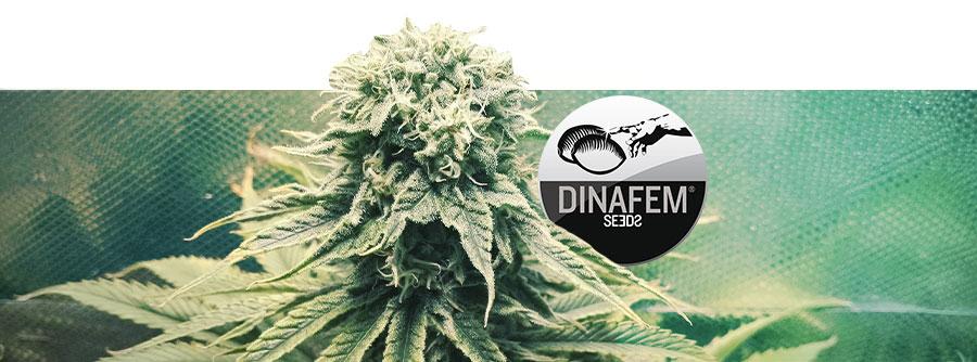 Información Sobre Dinafem