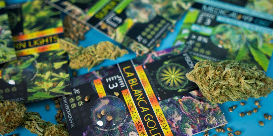 Las Semillas De Marihuana Más Populares De Vision Seeds