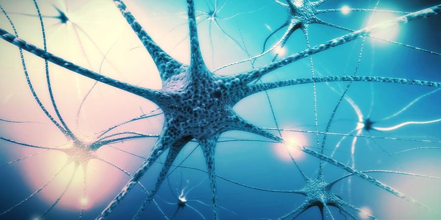 Paso 4: Alimenta el Sistema Nervioso