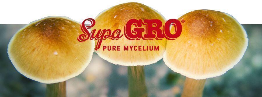 Kits de cultivo de setas alucinógenas Supa Gro