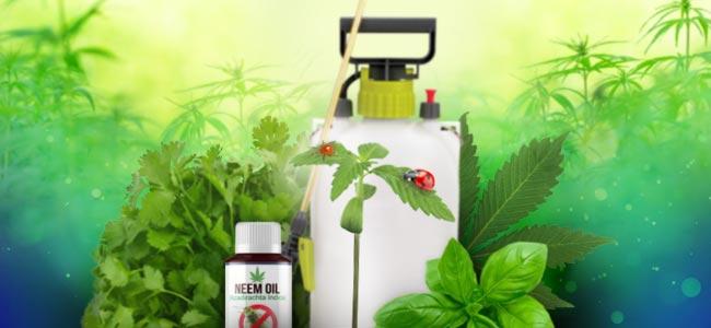 Cuidados Naturales De Las Plantas