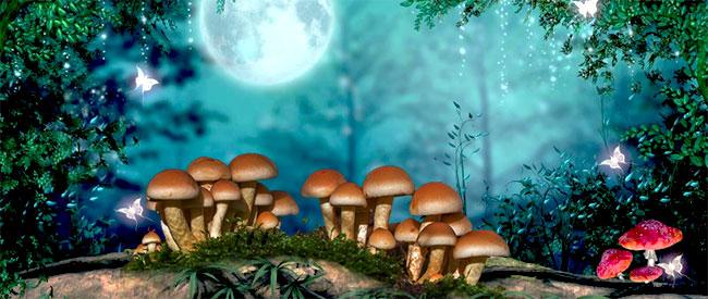 Setas mágicas en un bosque