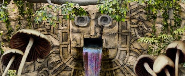Maya setas alucinógenas