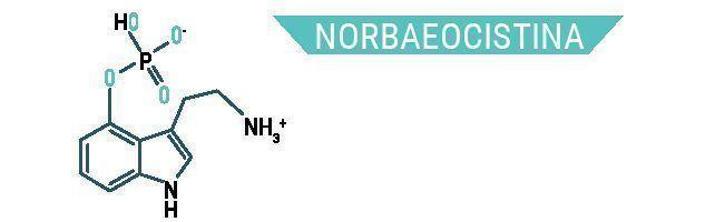 Norbaeocistina
