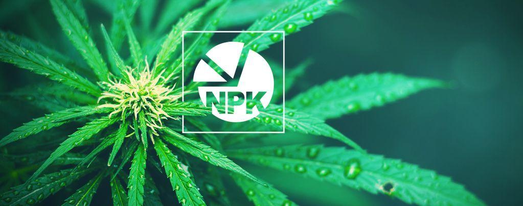 NPK: ¿Cuál Es La Mejor Proporción De Nutrientes Para Cultivar Marihuana?