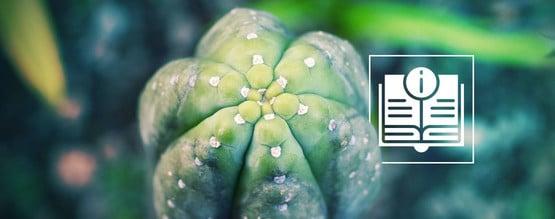 Guía Del Cactus San Pedro