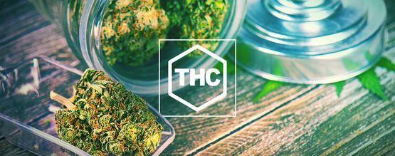 Todo Lo Que Debes Saber Sobre El THC