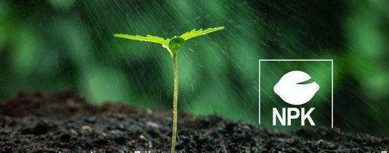 ¿Por Qué Necesitan Nutrientes Las Plantas De Cannabis?